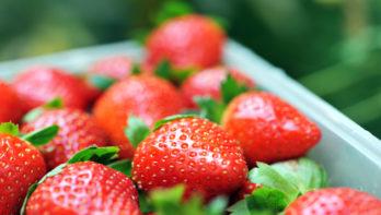 Superfoods uit eigen tuin