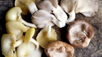 Zelf paddenstoelen kweken