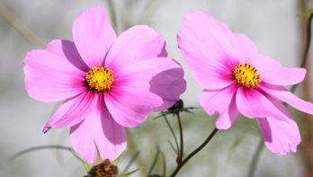 Bloemen voor de moestuin
