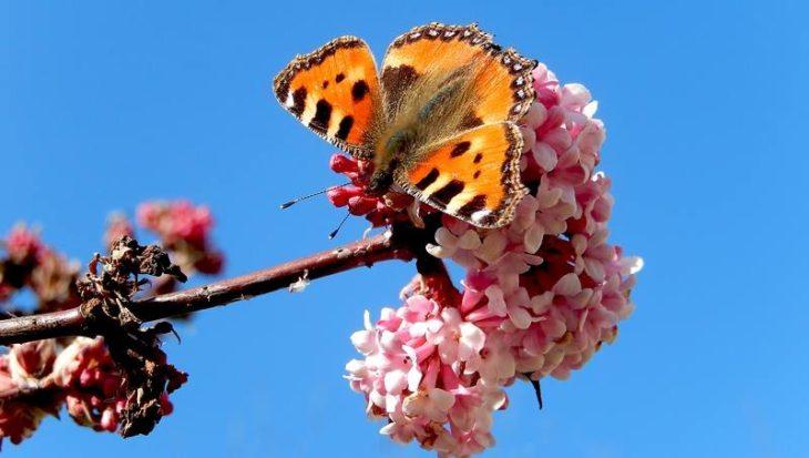 Maak je moestuin vlindervriendelijk