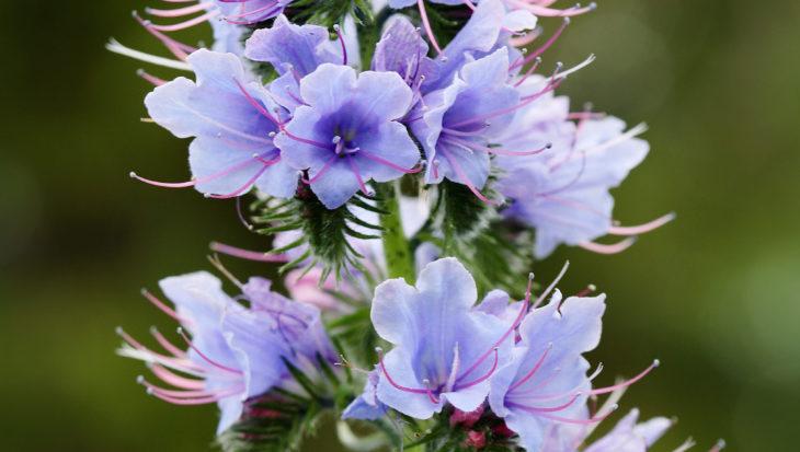 7x inheemse planten voor een grotere biodiversiteit